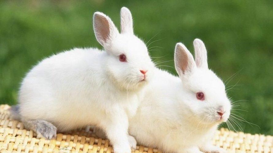 1歳児とウサギのいる生活